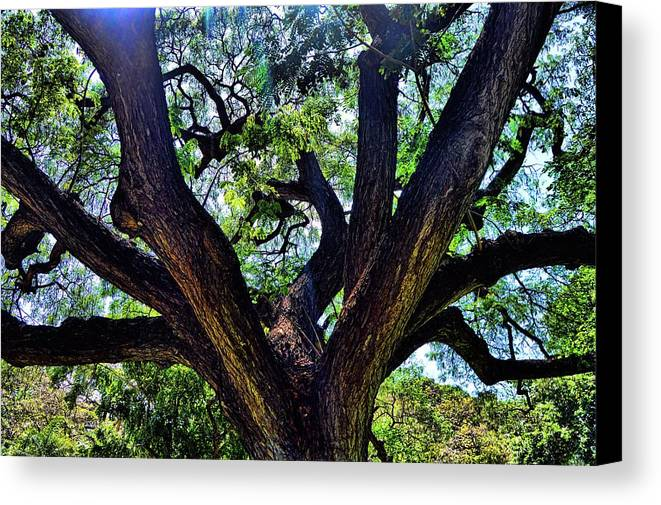 Tree Canvas Print featuring the photograph Tree 105 by Kristalin Davis