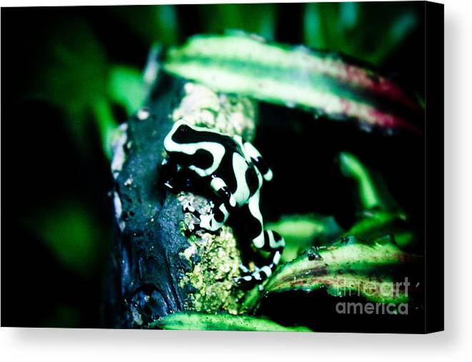 Frog Canvas Print featuring the photograph Tree Frog by Brenton Woodruff