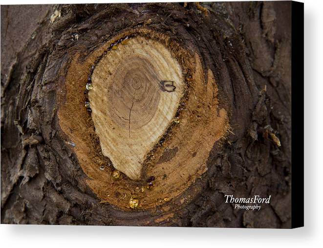 Tree Canvas Print featuring the photograph Tree Sap by Thomas Ford
