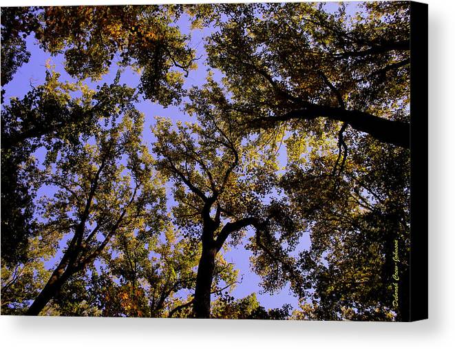 Trees Canvas Print featuring the photograph Trees Conversing by Deborah Crew-Johnson