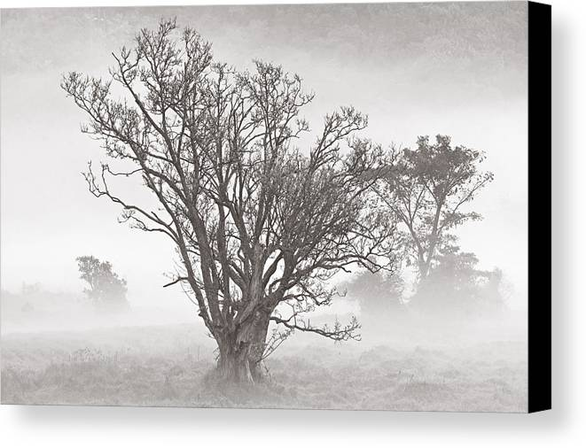Tree Canvas Print featuring the photograph Trees In Mist- St Lucia by Chester Williams