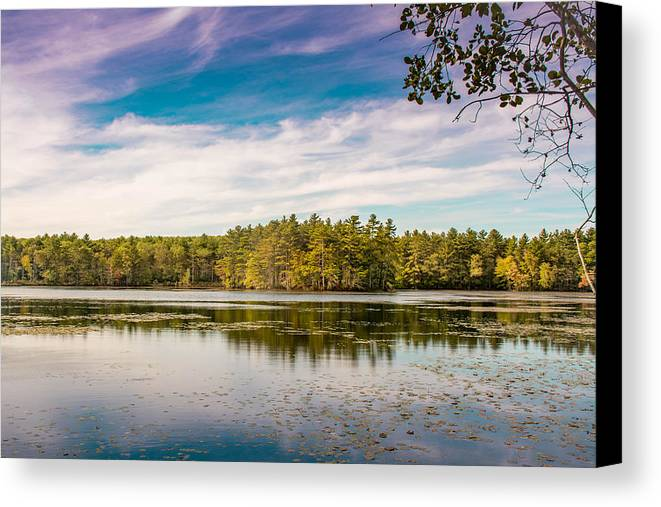 Trees Canvas Print featuring the photograph Trees by Jerri Moon