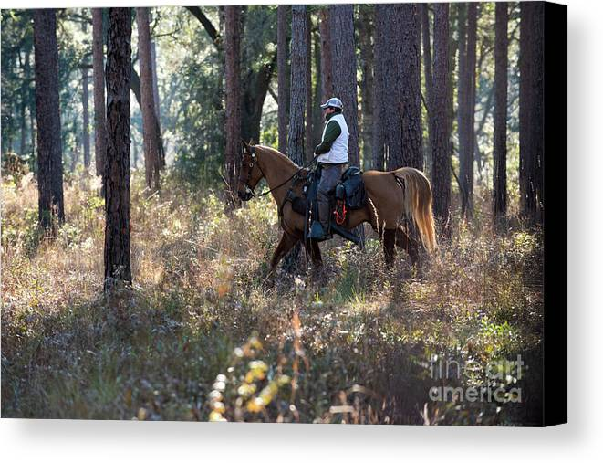 Canvas Print featuring the photograph Trey10 by Chip Laughton