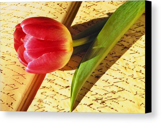 Bloom Canvas Print featuring the photograph Tulip On An Open Antique Book by Tony Ramos