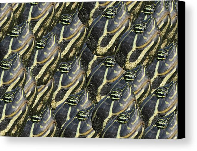 Turtle Canvas Print featuring the photograph Turtle Head by Bill Linhares