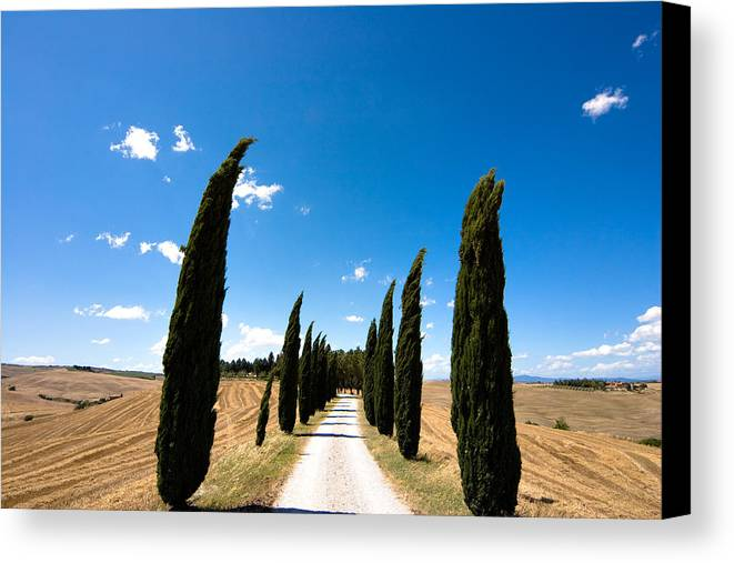 Tuscany Canvas Print featuring the photograph Tuscan Cypress Landscape by Mathew Lodge