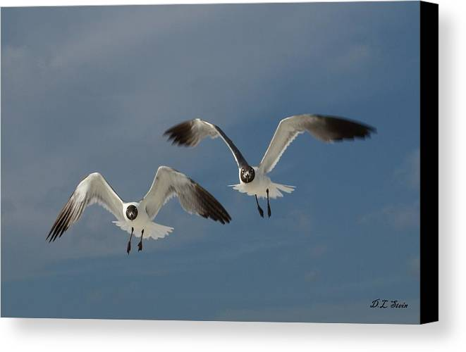 Seagulls Canvas Print featuring the photograph Two Seagulls by Dennis Stein