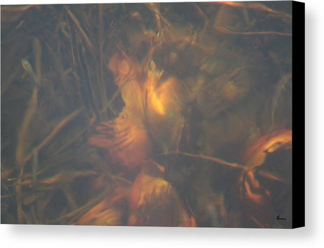 Waterlily Lake Water Fish Minnow Plants Lakebed Nature Wild Canvas Print featuring the photograph Under Waterlily by Andrea Lawrence