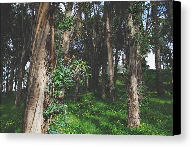 Coyote Point Canvas Print featuring the photograph Under Your Spell by Laurie Search