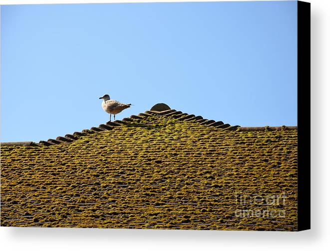 Upon The Roof Canvas Print featuring the photograph Upon The Roof by Des Marquardt