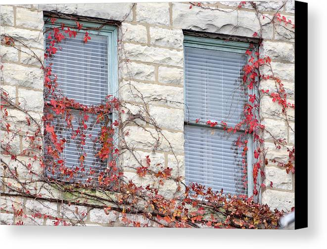 Architectural Canvas Print featuring the photograph Vines In Fall by Jan Amiss Photography