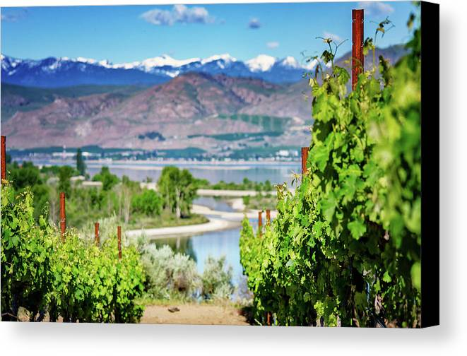 Photo Canvas Print featuring the photograph Vineyard View by Gene Wick