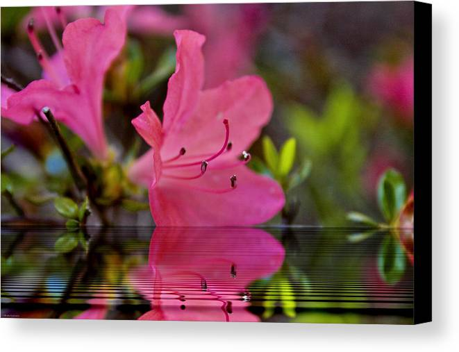 Water Canvas Print featuring the digital art Water Azalea by Ches Black