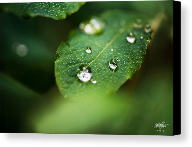 Nature Canvas Print featuring the photograph Water Droplets by Adnan Bhatti
