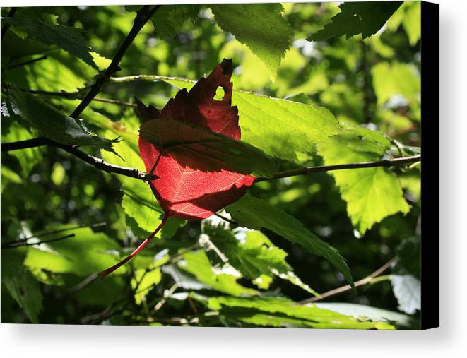 Foliage Canvas Print featuring the photograph Wealth by Alan Rutherford