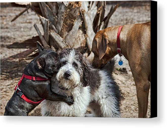 Dogs Canvas Print featuring the photograph Welcome Wagon by Bill Linhares