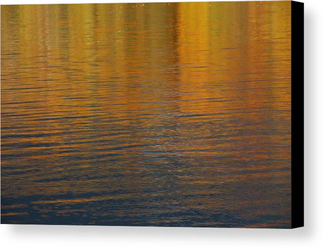 What Is Canvas Print featuring the photograph What Is by Rachel Cohen