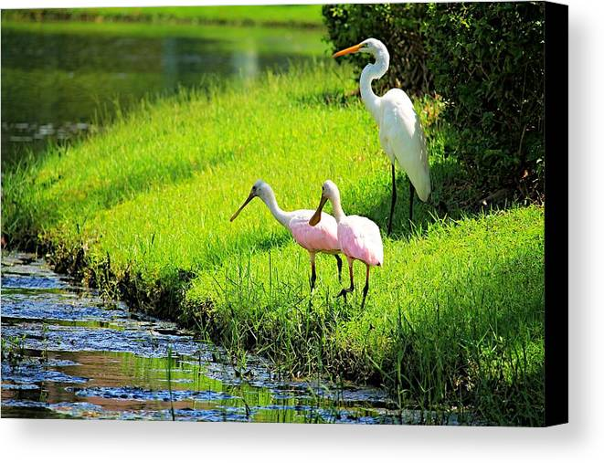Egret Canvas Print featuring the photograph White Egret And Roseate Spoonbills by Vicki Dreher