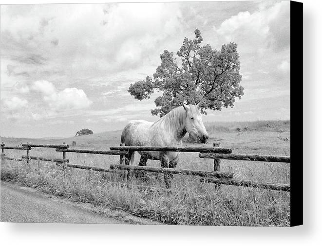 White Horse Canvas Print featuring the photograph White Horse by Budi Nur Mukmin