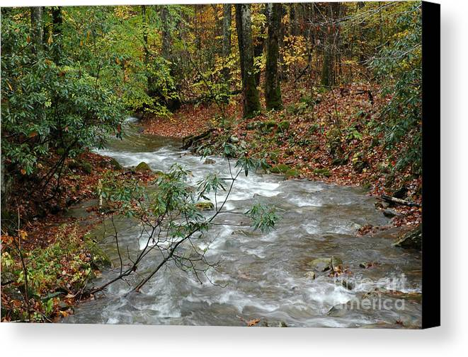 West Virginia Canvas Print featuring the photograph White Oak Run Autumn by Thomas R Fletcher