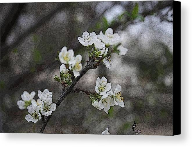 Flowers Canvas Print featuring the photograph White Simplicity by Janey Loree