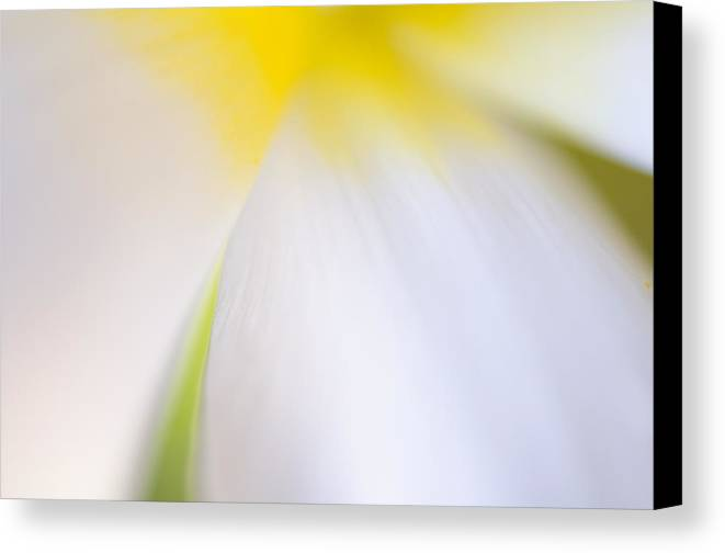 Flower Canvas Print featuring the photograph White Tulip Detail by Silke Magino