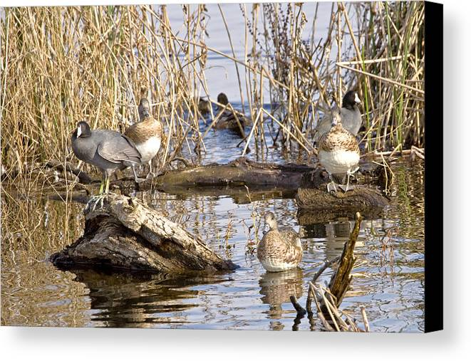 Nature Canvas Print featuring the photograph Who Is Watching Whom by Charlie Osborn