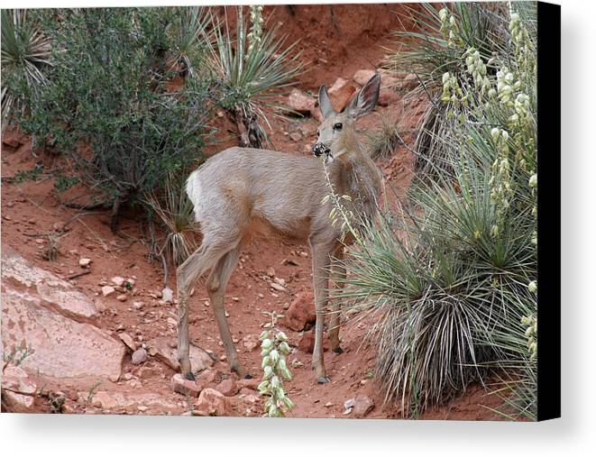 Deers Canvas Print featuring the photograph Wild And Pretty - Garden Of The Gods Colorado Springs by Christine Till