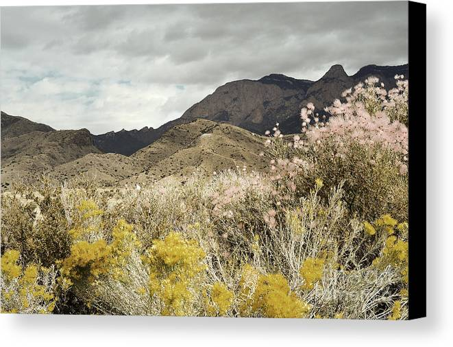 Sandia Mountains Canvas Print featuring the photograph Wildflower Mountain by Andrea Hazel Ihlefeld