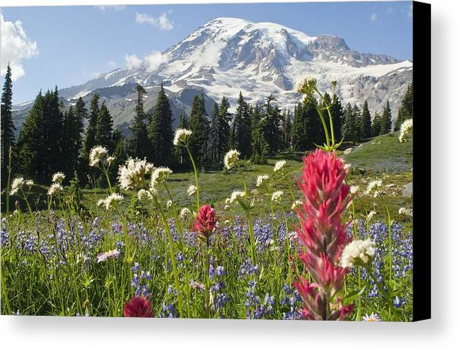 Attractions Canvas Print featuring the photograph Wildflowers In Mount Rainier National by Dan Sherwood