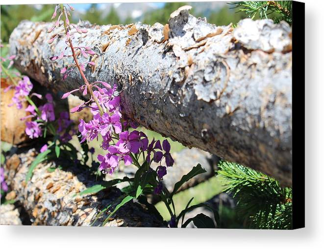 Wildflowers Canvas Print featuring the photograph Wildflowers On The Fence by Weathered Wood