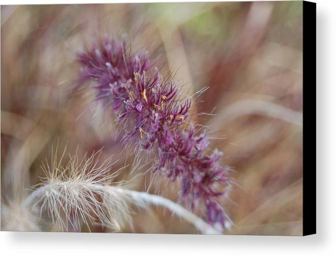 Wild Canvas Print featuring the photograph Wildgrass Collage by Jean Booth