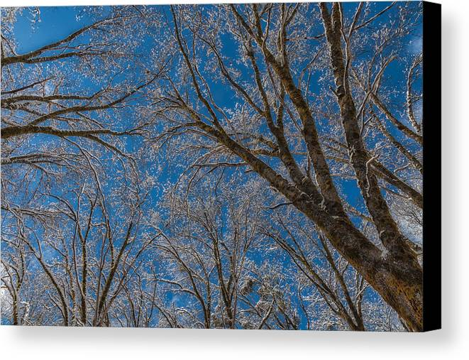 Landscape Canvas Print featuring the photograph Winter Beauty by Jonathan Nguyen
