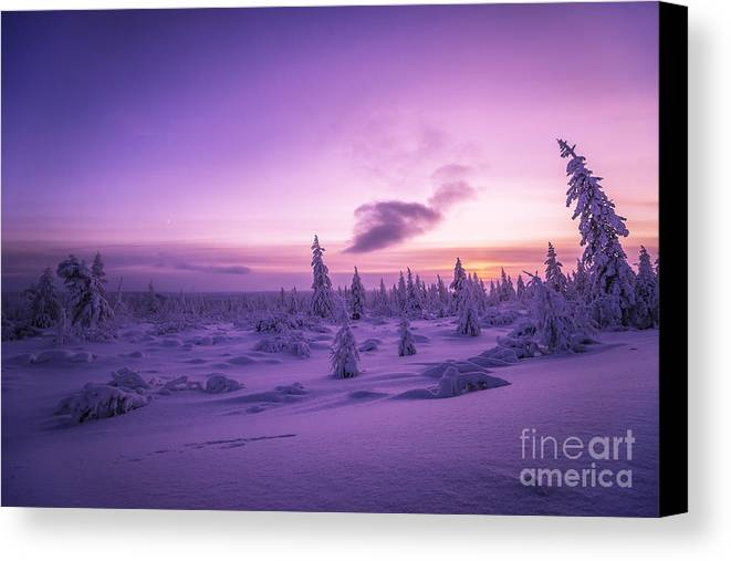 Sky Canvas Print featuring the photograph Winter Evening Landscape With Forest, Sunset And Cloudy Sky. by Oxana Gracheva