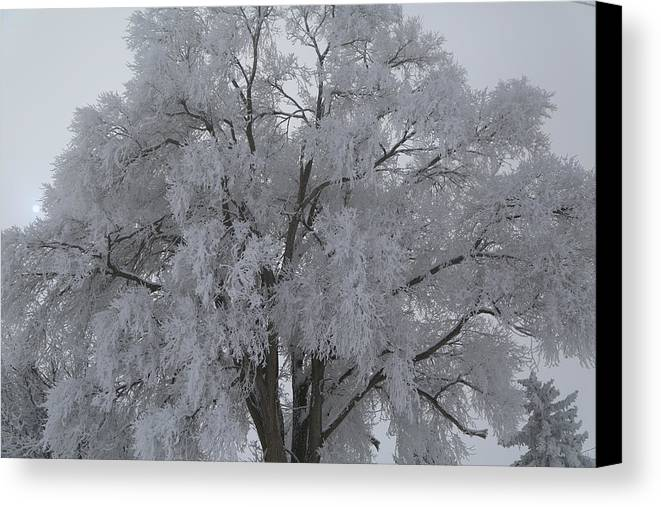 Winter Canvas Print featuring the photograph Winter Frost by Byron Fair