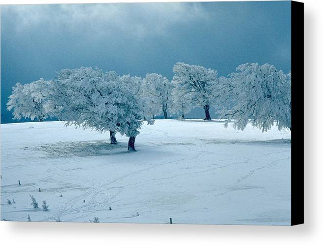 Winter Canvas Print featuring the photograph Winter Wonderland by Flavia Westerwelle