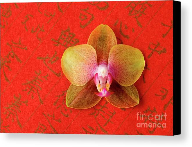 Orchid Canvas Print featuring the photograph Wishes Come True by Julia Hiebaum