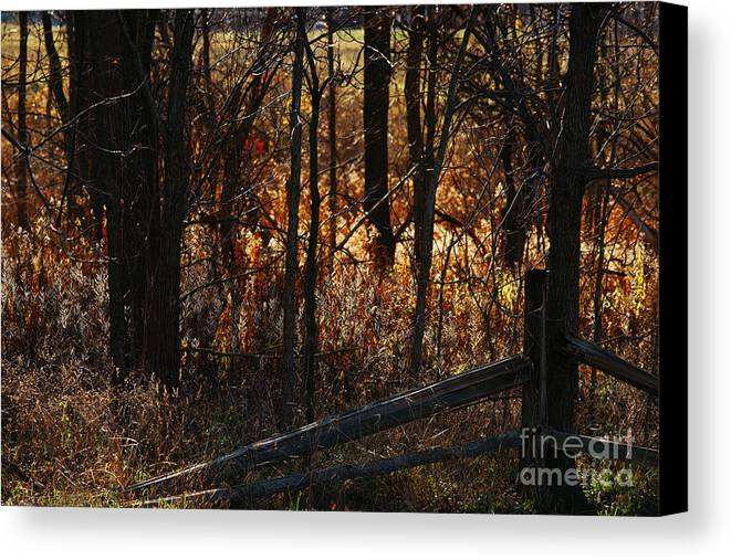 Michigan Canvas Print featuring the photograph Woods - 1 by Linda Shafer