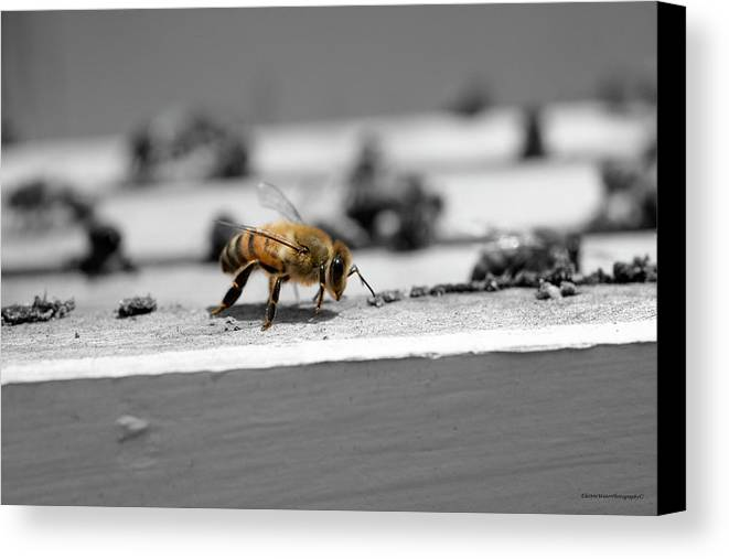 Honey Canvas Print featuring the photograph Worker Bee by Alana Krantz