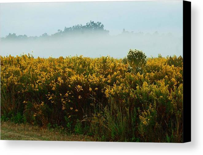 Pelican Canvas Print featuring the digital art Yellow Field And The Fog by Michael Thomas