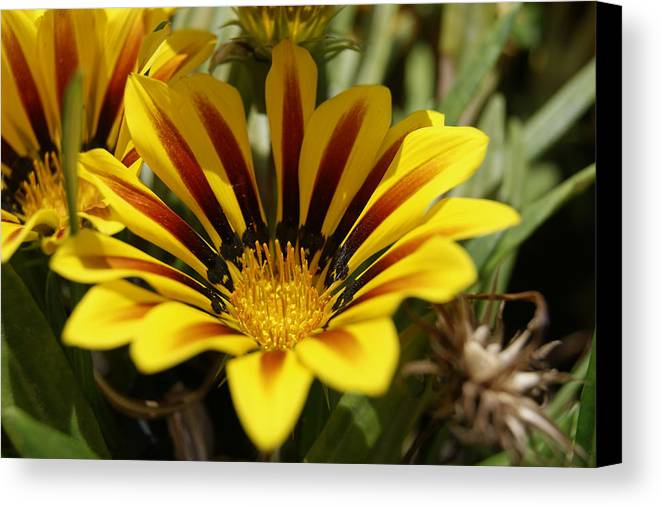 Flower Canvas Print featuring the photograph Yellow Flower by Bastian Brisch