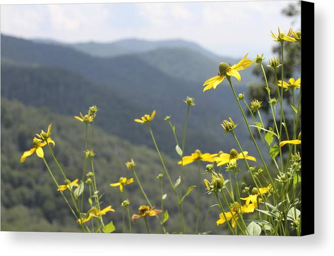 Yellow Canvas Print featuring the photograph Yellow Flowers by Tina Foote