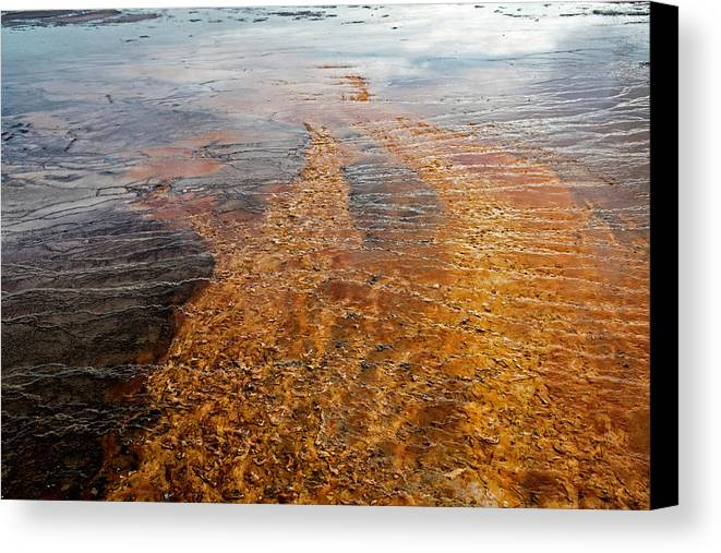 Yellowstone Canvas Print featuring the photograph Yellowstone Colors #7 by Scott Read