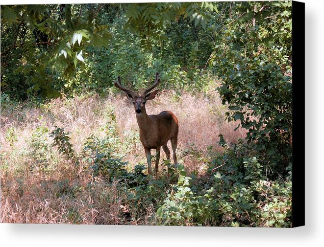 Landscape Canvas Print featuring the photograph You Looking At Me by Richard Verkuyl