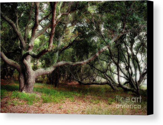 Southern Canvas Print featuring the photograph Young Live Oaks by Susan Isakson