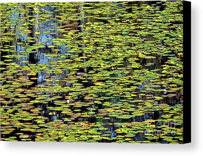 Lilly Canvas Print featuring the photograph Lilly Pond Painting by Linda Vodzak