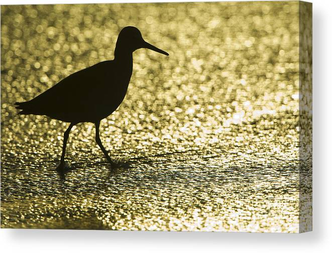 Nature Canvas Print featuring the photograph Bird Silhouette by John Shaw