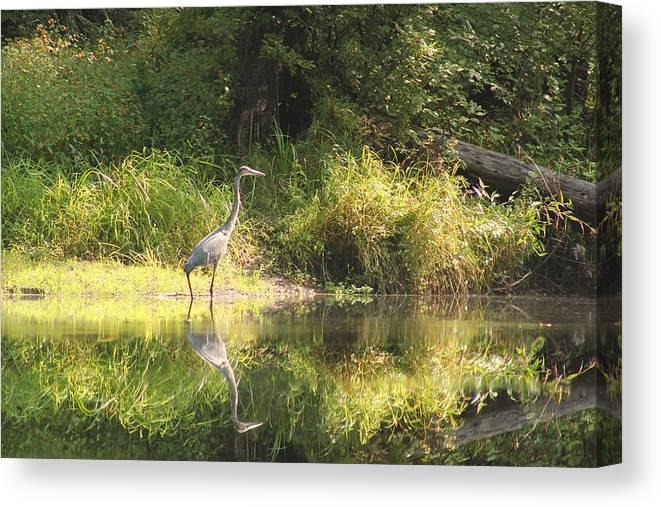Birds Canvas Print featuring the photograph Blue Heron by Wayne Toutaint
