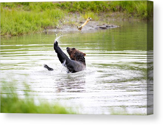 Animal Canvas Print featuring the photograph Brown Bear Playing With A Bone by Paul Fell