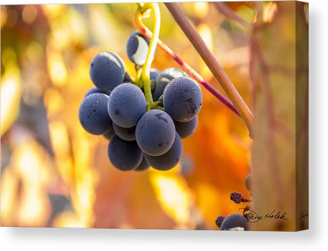 Autumn Canvas Print featuring the photograph Harvest Gratitude by Doug Holck